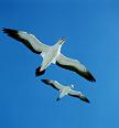 Eigen vleugels